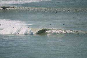 El Ñuro Beach - Surfing Beaches in Peru